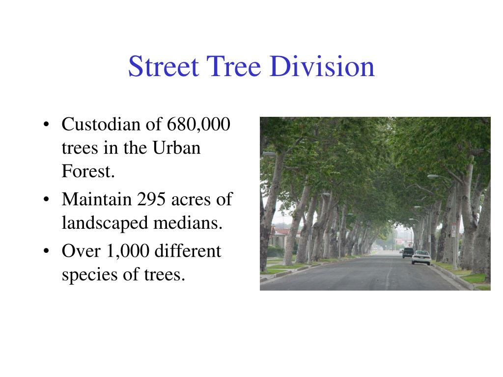 Street Tree Division