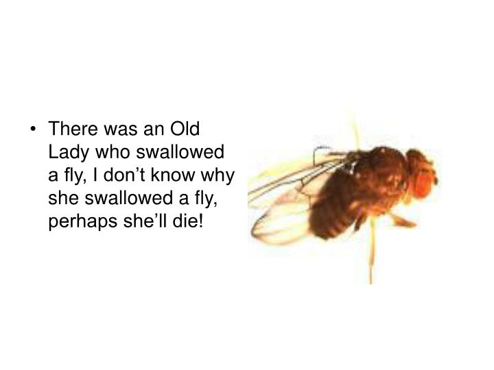 There was an Old Lady who swallowed a fly, I don't know why she swallowed a fly, perhaps she'll ...