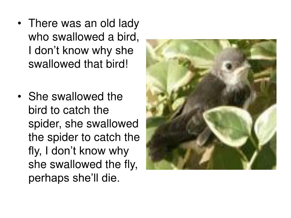 There was an old lady who swallowed a bird, I don't know why she swallowed that bird!