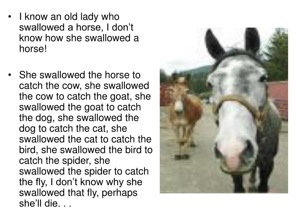 I know an old lady who swallowed a horse, I don't know how she swallowed a horse!