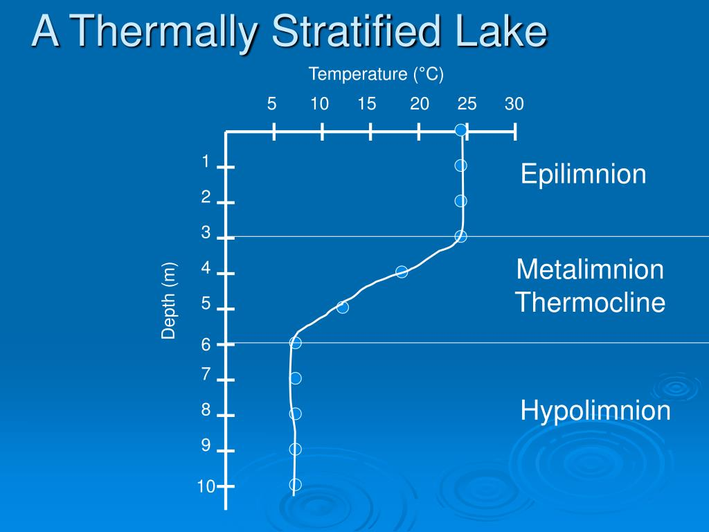 A Thermally Stratified Lake
