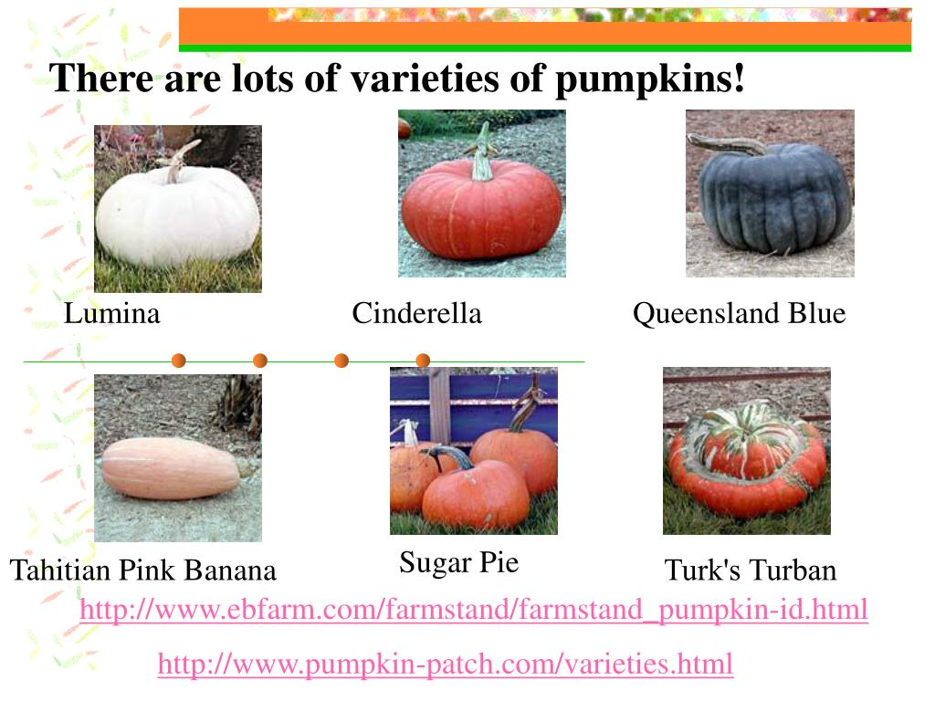 There are lots of varieties of pumpkins!