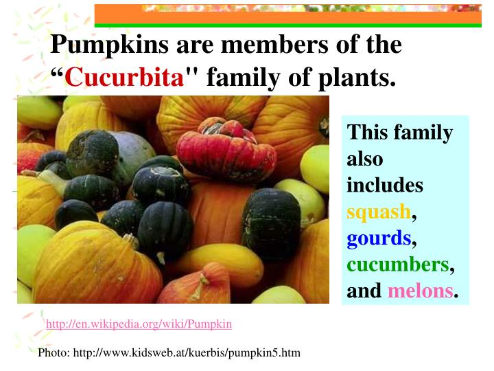 Pumpkins are members of the ""