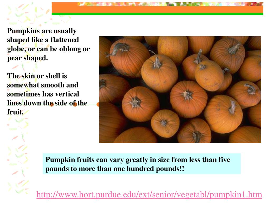 Pumpkins are usually shaped like a flattened globe, or can be oblong or pear shaped.