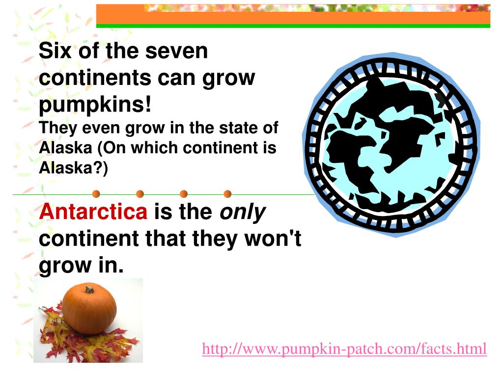 Six of the seven continents can grow pumpkins!