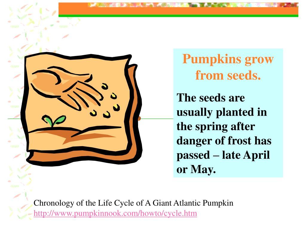 Pumpkins grow from seeds.