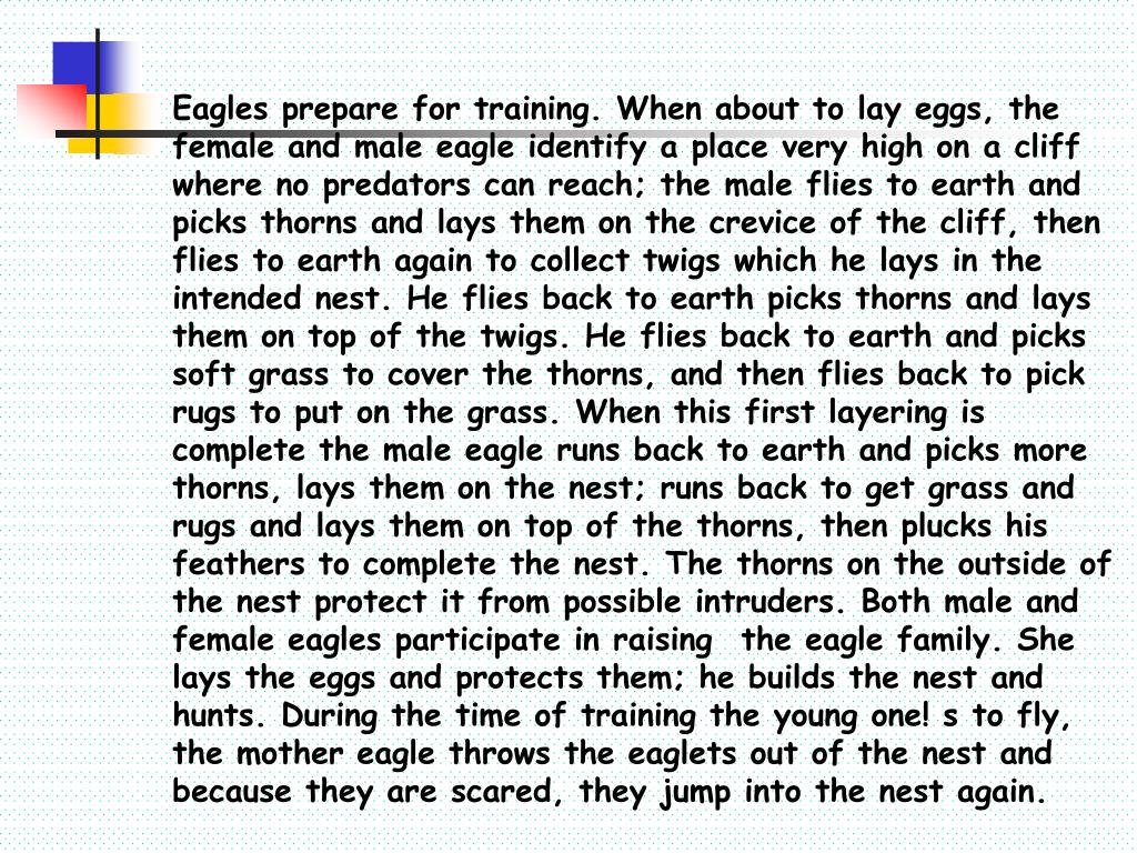 Eagles prepare for training. When about to lay eggs, the female and male eagle identify a place very high on a cliff where no predators can reach; the male flies to earth and picks thorns and lays them on the crevice of the cliff, then flies to earth again to collect twigs which he lays in the intended nest. He flies back to earth picks thorns and lays them on top of the twigs. He flies back to earth and picks soft grass to cover the thorns, and then flies back to pick rugs to put on the grass. When this first layering is complete the male eagle runs back to earth and picks more thorns, lays them on the nest; runs back to get grass and rugs and lays them on top of the thorns, then plucks his feathers to complete the nest. The thorns on the outside of the nest protect it from possible intruders. Both male and female eagles participate in raising	the eagle family. She lays the eggs and protects them; he builds the nest and hunts. During the time of training the young one! s to fly, the mother eagle throws the eaglets out of the nest and because they are scared, they jump into the nest again.