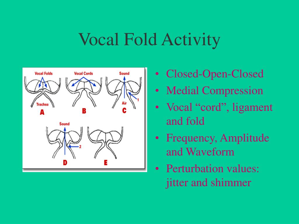 Vocal Fold Activity
