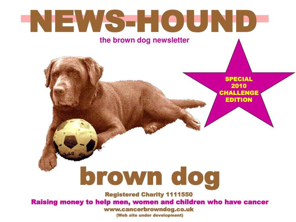 NEWS-HOUND