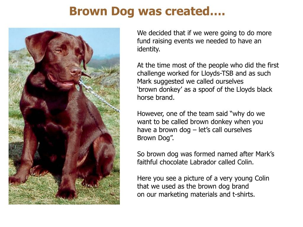 Brown Dog was created….