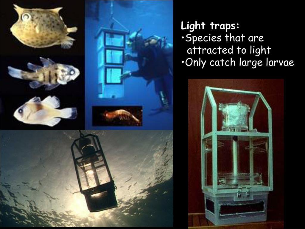 Light traps: