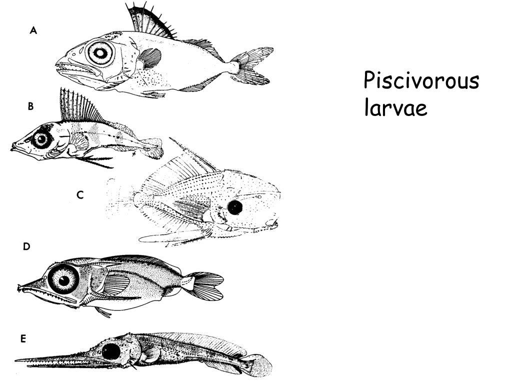 Piscivorous