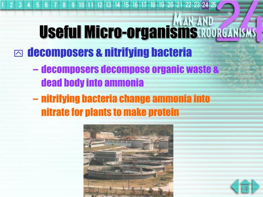 Useful Micro-organisms