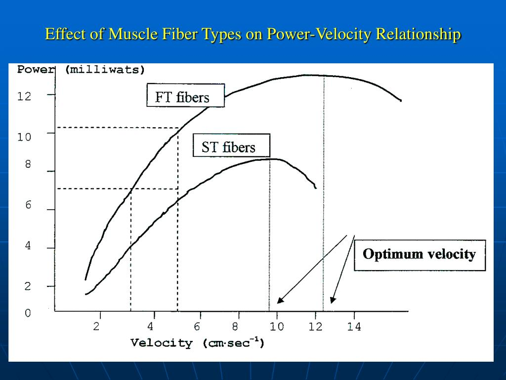 Effect of Muscle Fiber Types on Power-Velocity Relationship