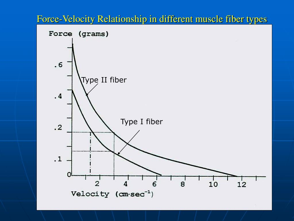 Force-Velocity Relationship in different muscle fiber types