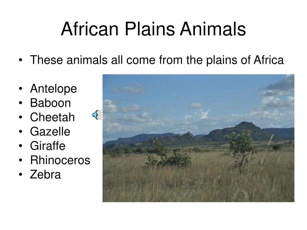 African Plains Animals
