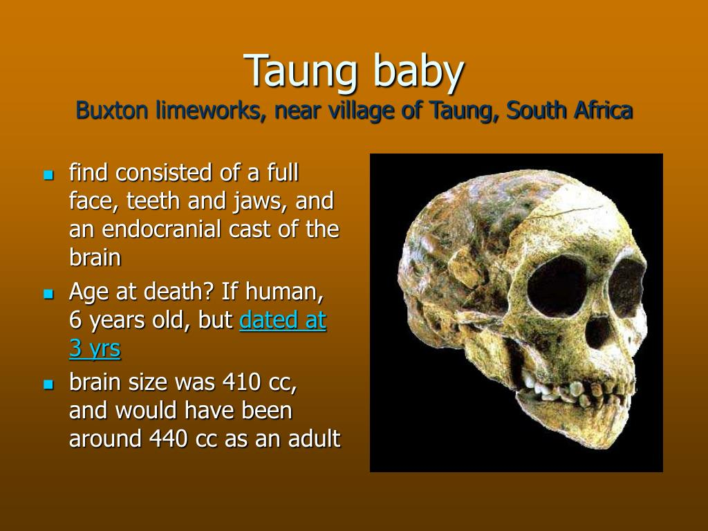 Taung baby