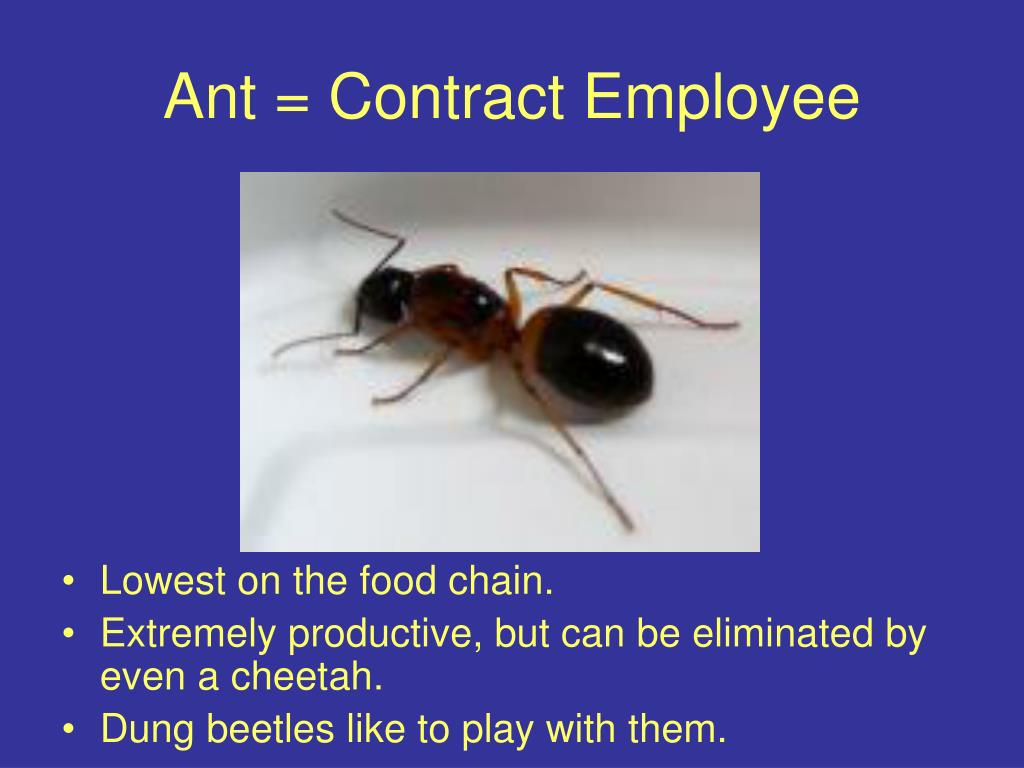 Ant = Contract Employee