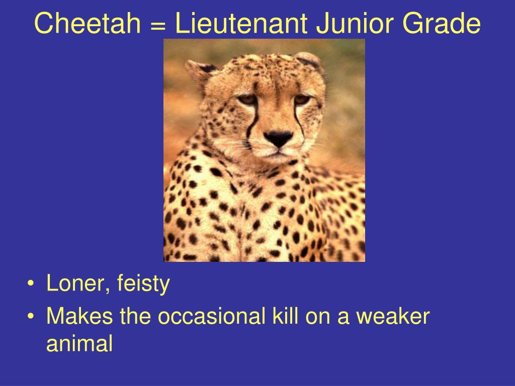 Cheetah = Lieutenant Junior Grade