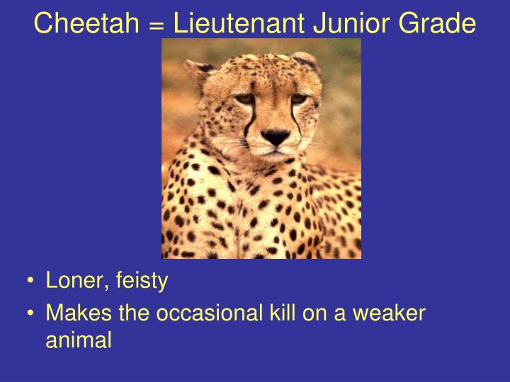 Cheetah lieutenant junior grade