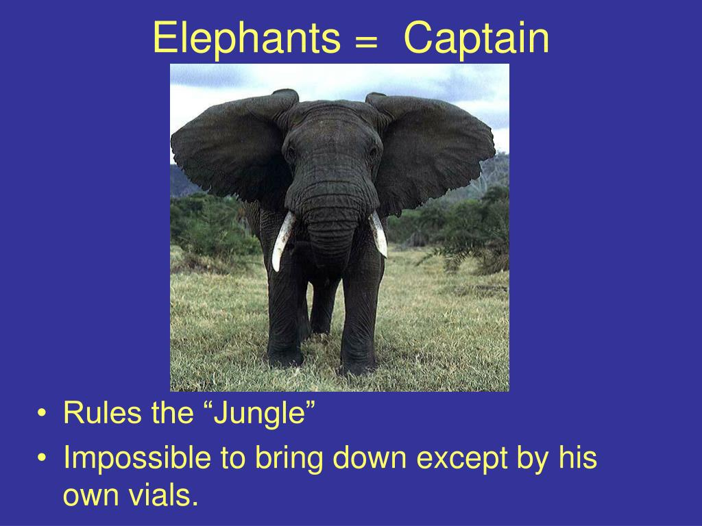 Elephants =  Captain