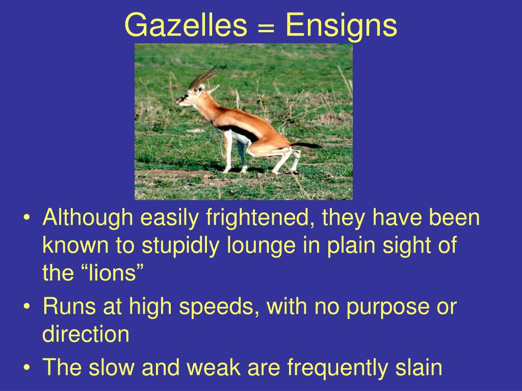 Gazelles = Ensigns