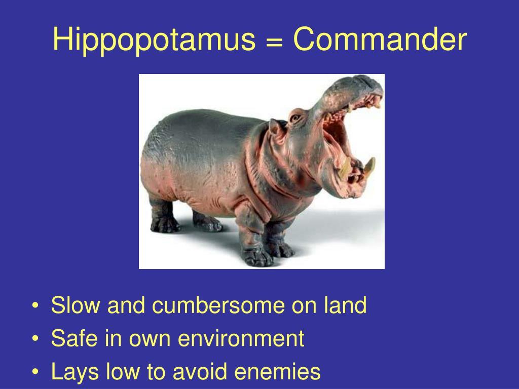 Hippopotamus = Commander