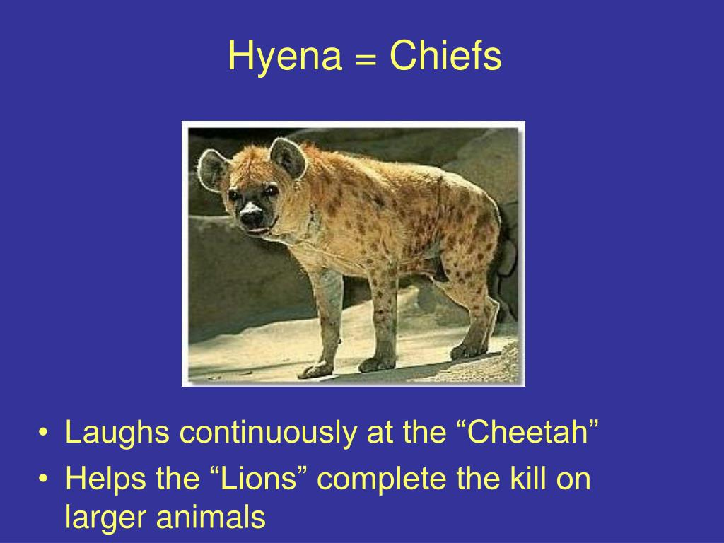 Hyena = Chiefs