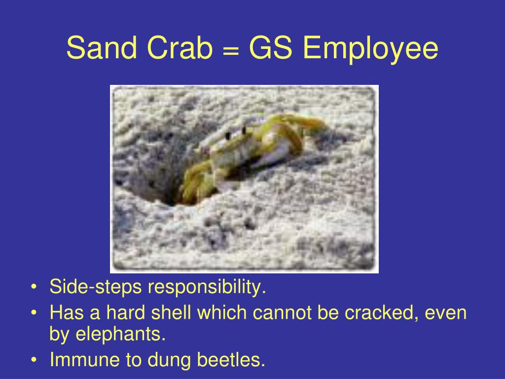 Sand Crab = GS Employee