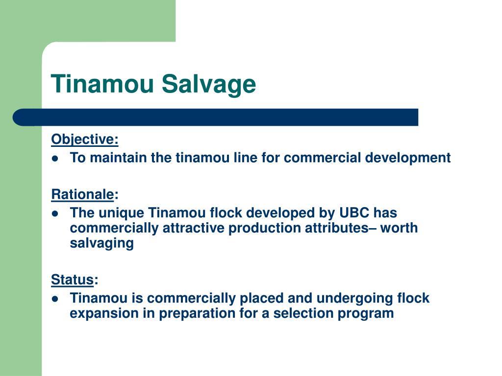 Tinamou Salvage