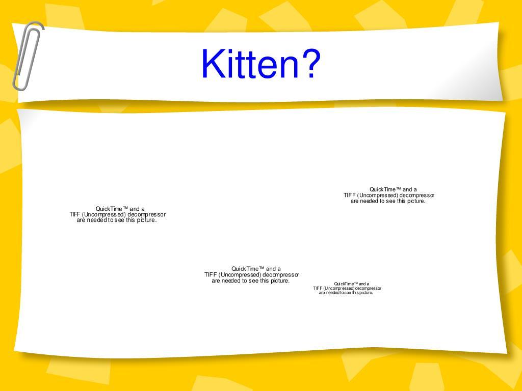 Kitten?