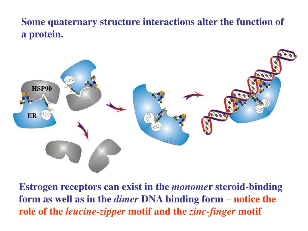 Some quaternary structure interactions alter the function of a protein.
