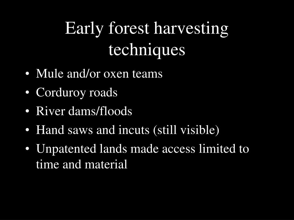Early forest harvesting techniques