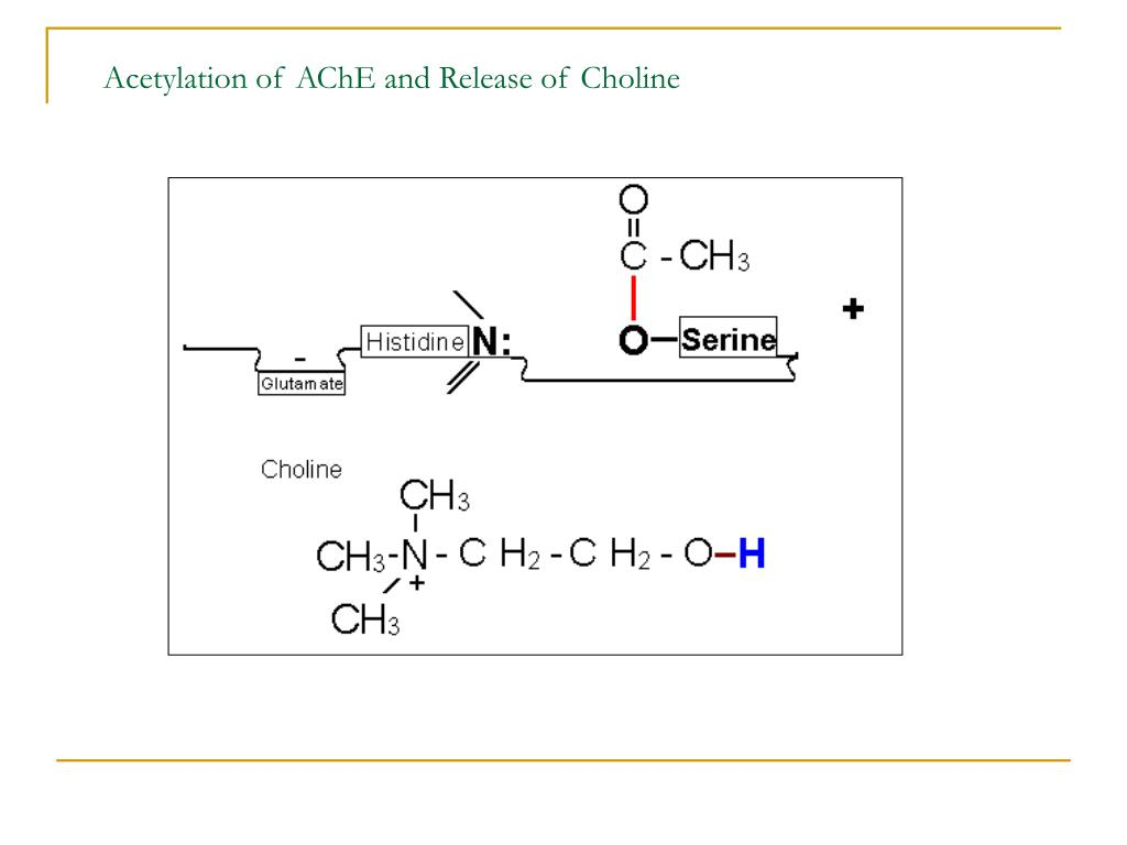 Acetylation of AChE and Release of Choline