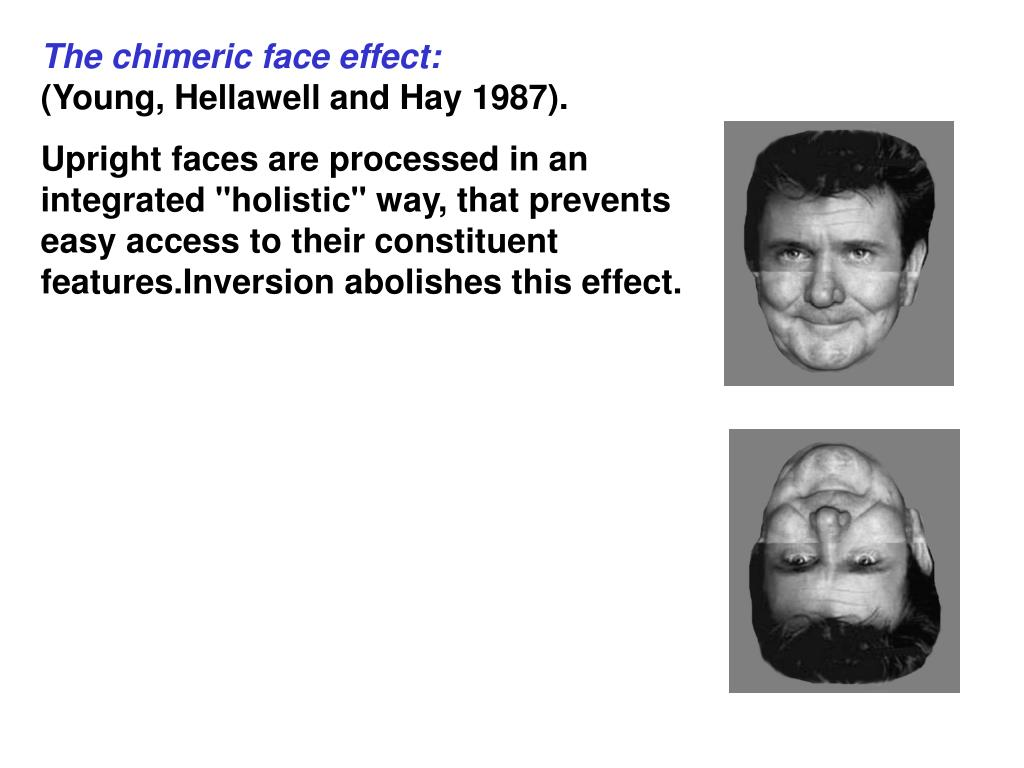 The chimeric face effect: