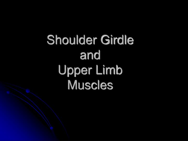 Shoulder girdle and upper limb muscles l.jpg