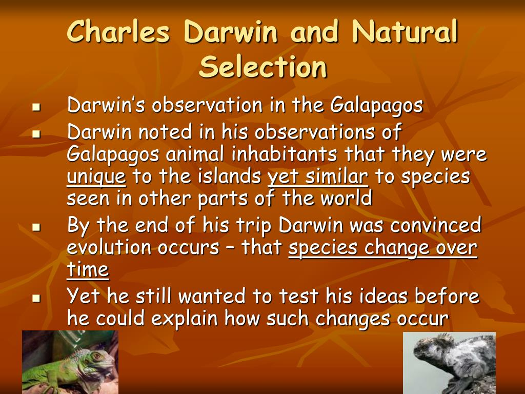 charles darwin and natural selection essay Natural selection is the differential survival and reproduction of individuals due to differences in phenotypeit is a key mechanism of evolution, the change in the heritable traits characteristic of a population over generations charles darwin popularised the term natural selection, contrasting it with artificial selection, which is intentional, whereas natural selection is not.