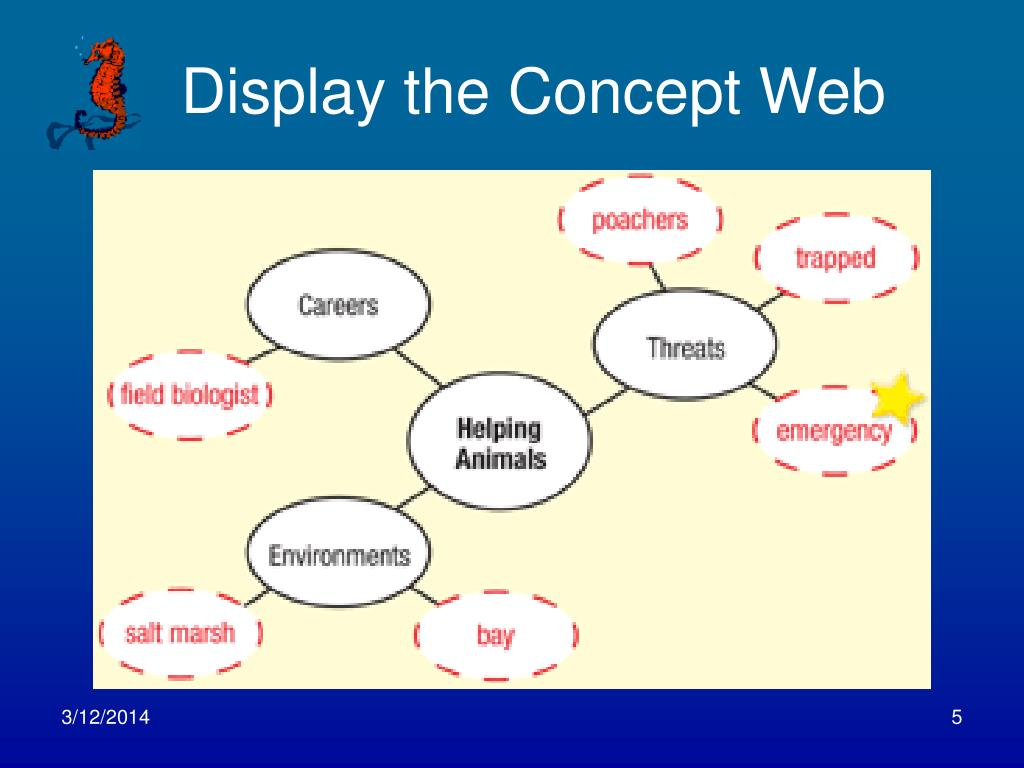 Display the Concept Web