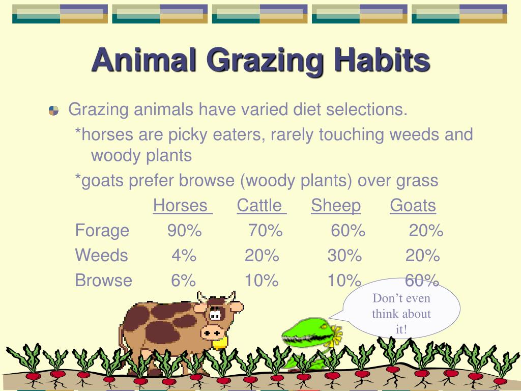 Animal Grazing Habits