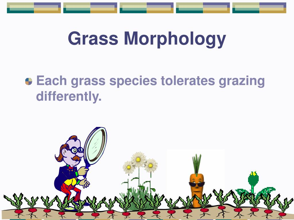 Grass Morphology