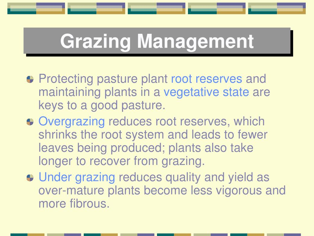 Grazing Management