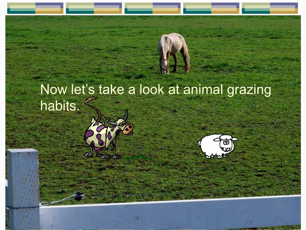 Now let's take a look at animal grazing habits.