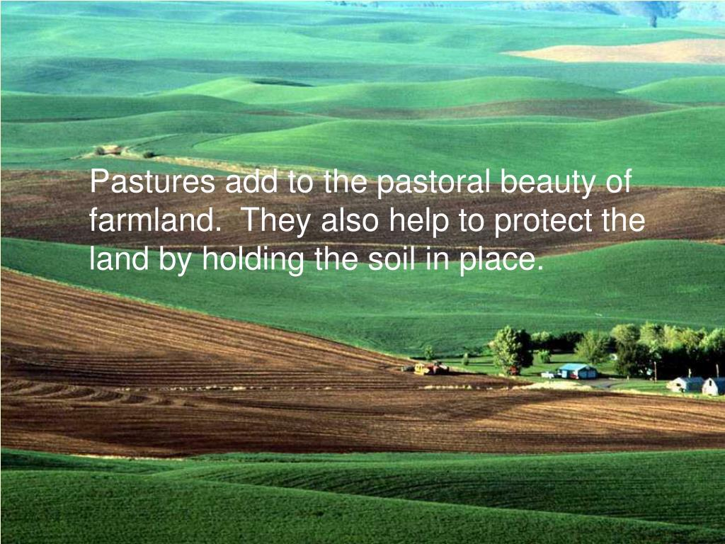 Pastures add to the pastoral beauty of farmland.  They also help to protect the land by holding the soil in place.