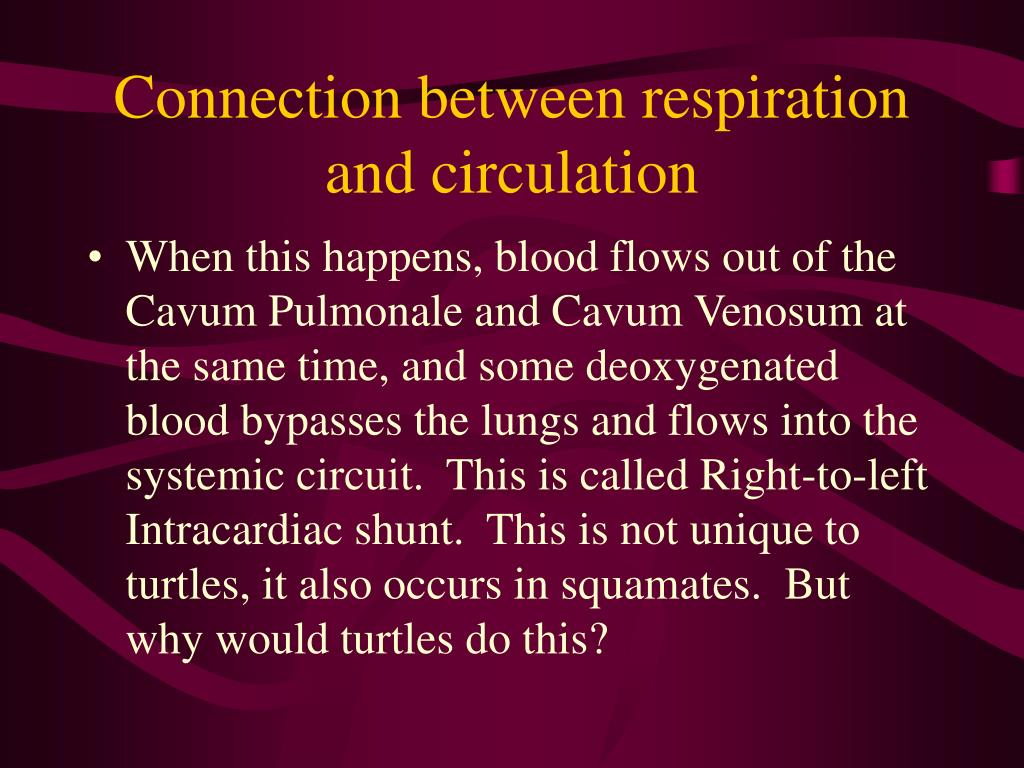 Connection between respiration and circulation