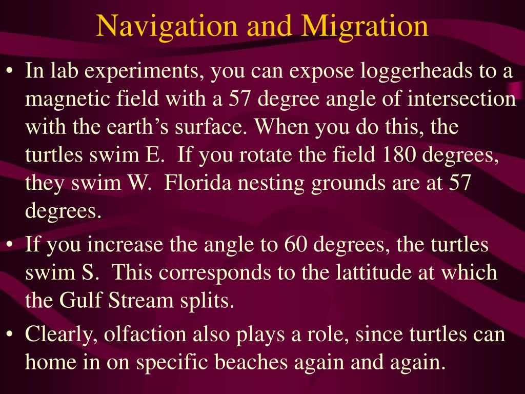 Navigation and Migration