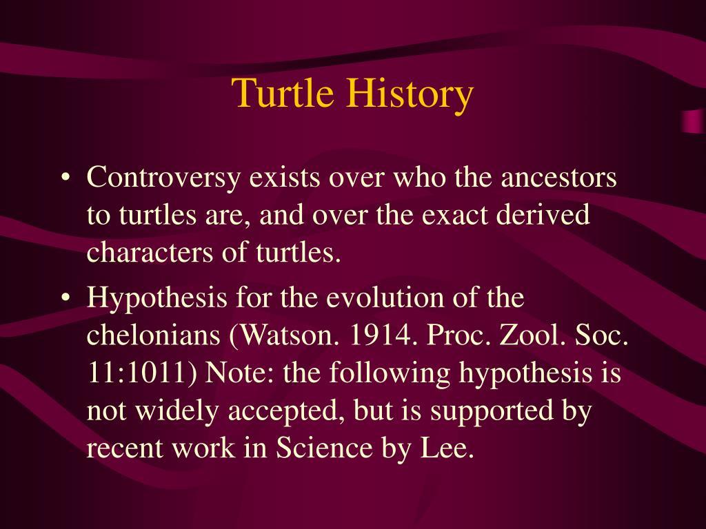 Turtle History