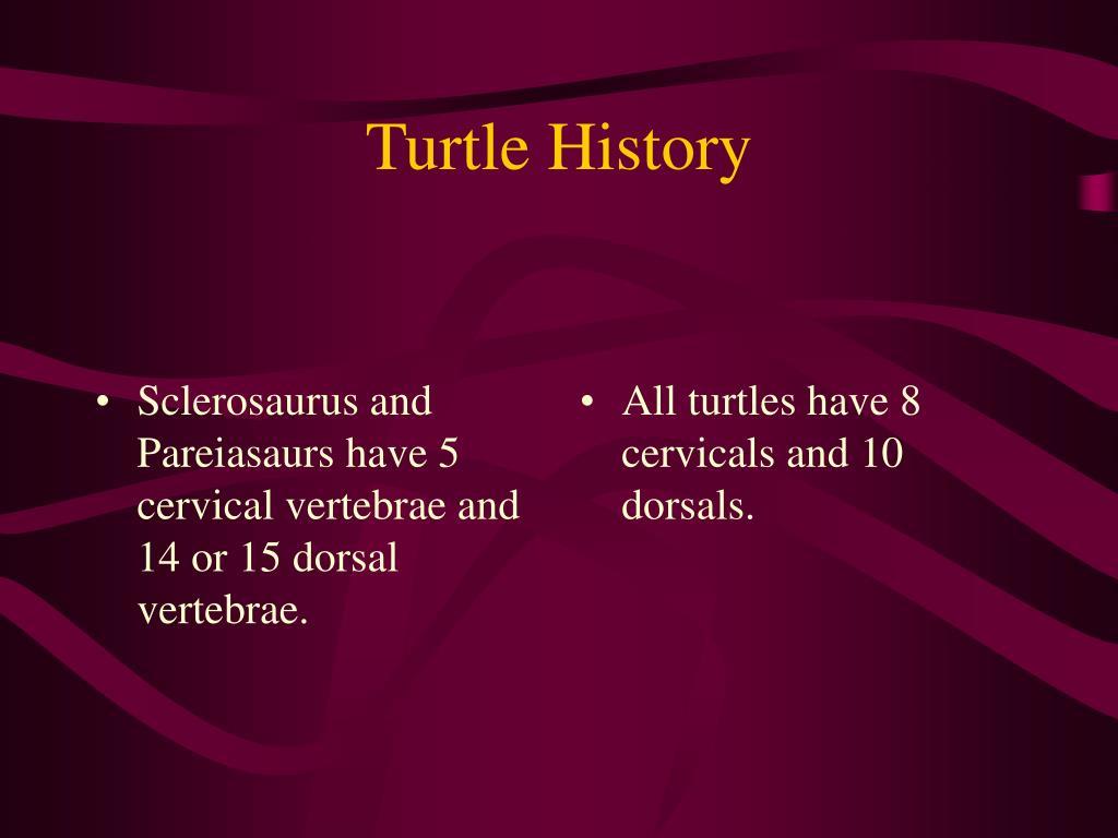 Sclerosaurus and Pareiasaurs have 5 cervical vertebrae and 14 or 15 dorsal vertebrae.
