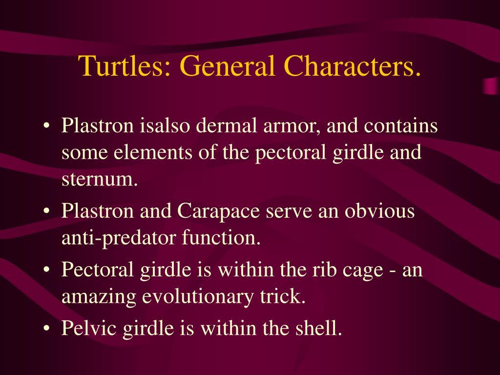 Turtles: General Characters.