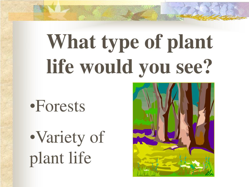 What type of plant life would you see?