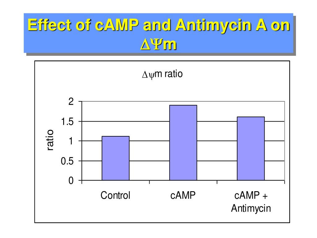 Effect of cAMP and Antimycin A on